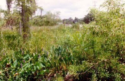 Cypress Creek Wellfield ecological monitoring.