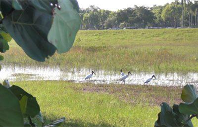 I-75 Wood Stork Suitable Foraging Habitat Management.