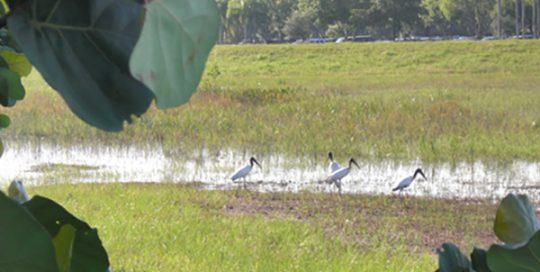 I-75 Wood Stork Suitable Foraging Habitat Management.